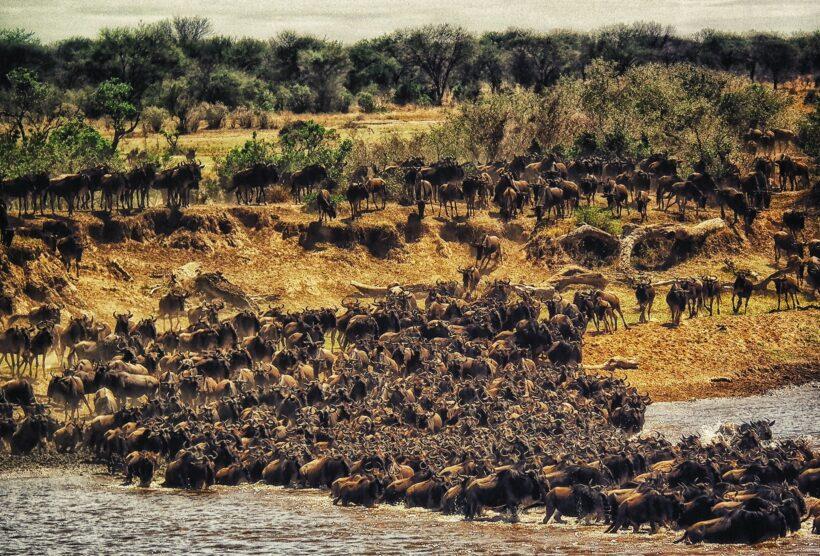 Kenya – Masai Mara